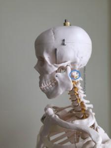 Atlaswirbel, Kopfschmerzen, Schwindel, Nackenschmerzen, Chiropraktor, Chiropraktor-Haus, Chiropraktik